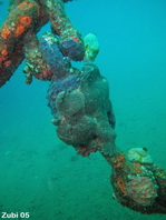 Gray Giant Frogfish (Antennarius commerson) on a rope